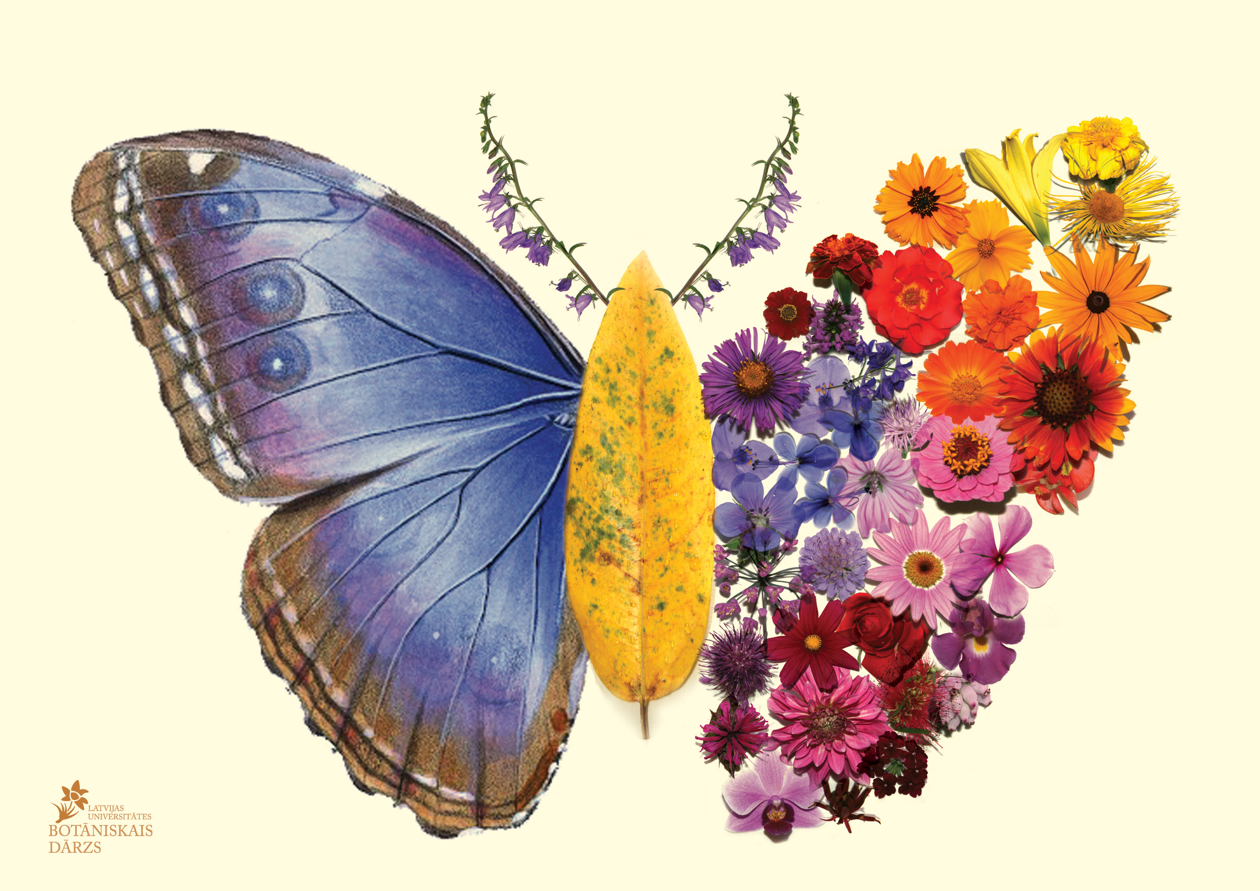summer price action at the garden and tropical butterfly house